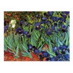 Irises by Vincent van Gogh Postcards