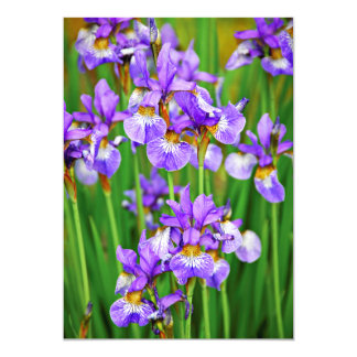 Irises Card