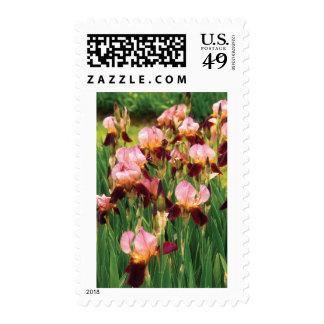 Irises - GY Morrison Postage Stamp