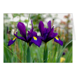 Irises In a field Greeting Card