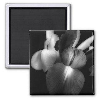 Irises in Black & White 1941 2 Inch Square Magnet