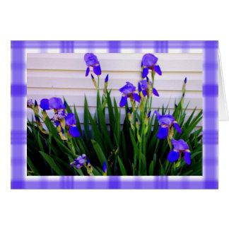 Irises in Springtime Card