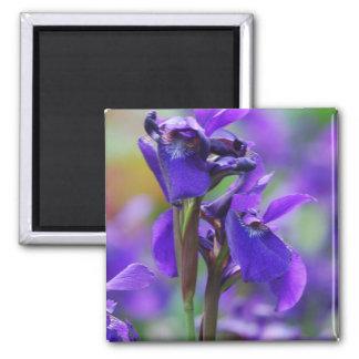 Irises Magnet Fridge Magnets