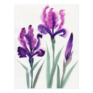 Irises Post Cards