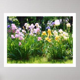Irises zazzle_print