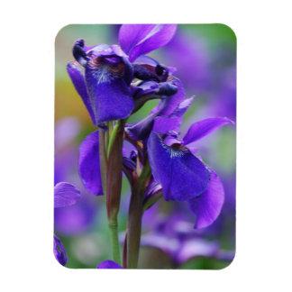 Irises  Premium Magnet Flexible Magnet