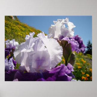 Irises Spring Meadow art prints Purple Iris Flower Poster