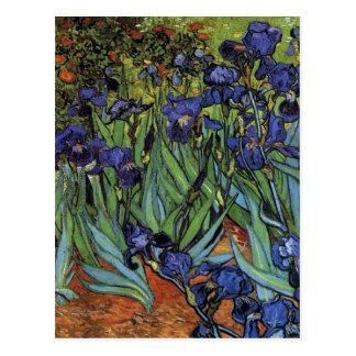 Irises Van Gogh Postcard