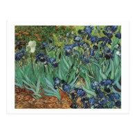 Irises  Vincent van Gogh Post Card