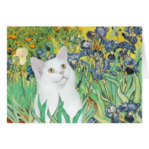 Irises - White cat Card