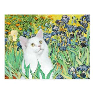 Irises - White cat Postcard