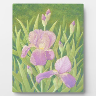 Irises, Wisley Gardens Plaque - 8x10 With Easel