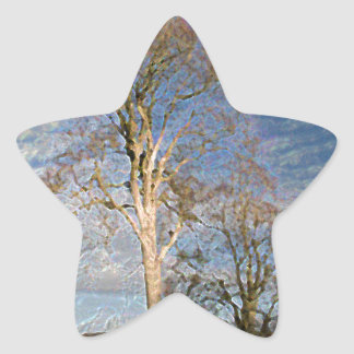 Irish Beech Trees Star Sticker