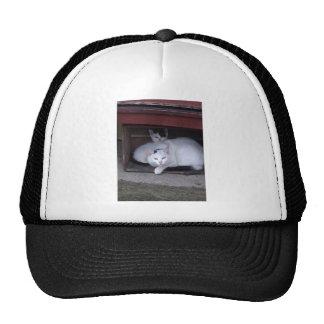 Irish Cats Take ShelterOn A Rainy Day In Ireland Trucker Hat
