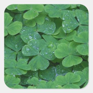 Irish Celtic Shamrocks Square Sticker