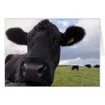 Irish cow! greeting card