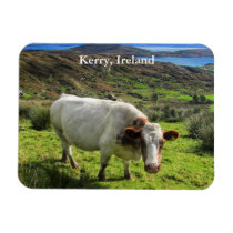 Irish Cow, Kerry Ireland Magnet