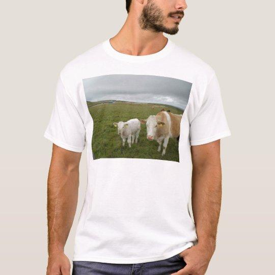 IRISH COWS T-Shirt