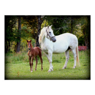 Irish Draft Horse Poster
