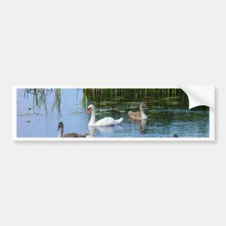 Irish ducks on the River Shannon Bumper Sticker