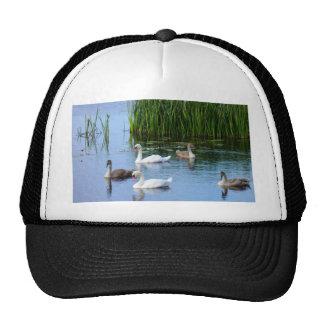 Irish ducks on the River Shannon Trucker Hat