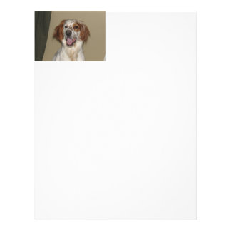 irish red and white setter.png flyer
