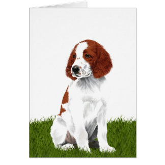 Irish Red and White Setter Puppy Card