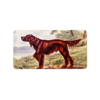Irish Setter 1900 Illustration of Sporting Dog Personalized Address Labels