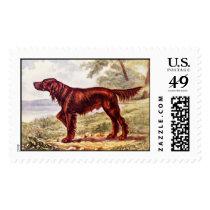Irish Setter 1900 Illustration of Sporting Dog Postage