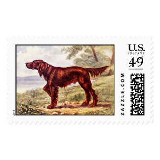 Irish Setter 1900 Illustration of Sporting Dog Stamp