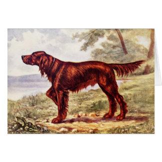 Irish Setter 1900 Illustration of Sporting Dog Stationery Note Card