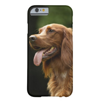 Irish Setter 2 Barely There iPhone 6 Case