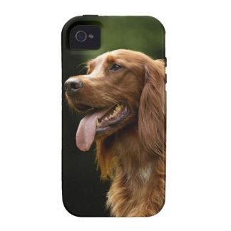 Irish Setter 2 Case-Mate iPhone 4 Fundas