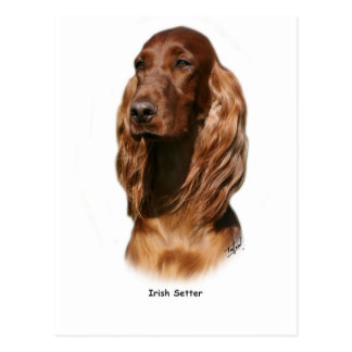 Irish Setter 9Y322D-116 Postcards