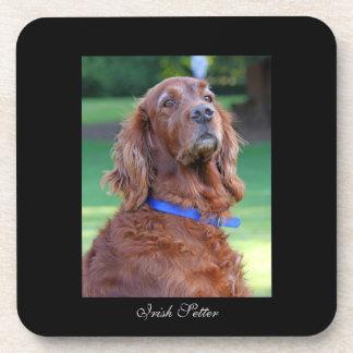 Irish Setter dog beautiful photo portrait, gift Drink Coasters