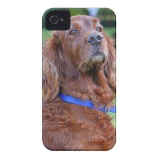 Irish Setter dog beautiful photo portrait, gift iPhone 4 Cover