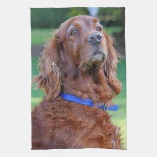 Irish Setter dog beautiful photo portrait, gift Towel