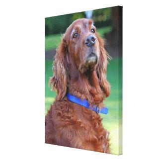 Irish Setter dog beautiful photo portrait, print Gallery Wrap Canvas