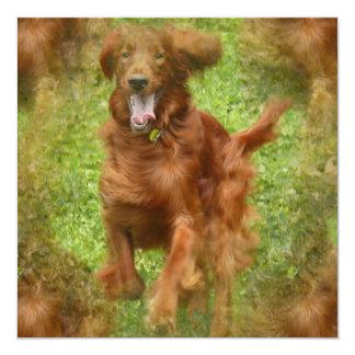 "Irish Setter Dog Invitation 5.25"" Square Invitation Card"