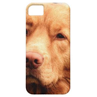Irish Setter iPhone SE/5/5s Case