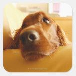 Irish Setter on sofa Sticker