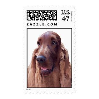 Irish Setter postage stamp