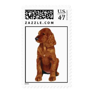 Irish Setter puppy postage stamp