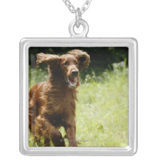 Irish Setter Silver Plated Necklace