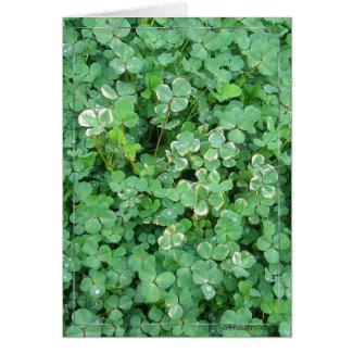 Irish Shamrocks Nature Photo Blank Note Card