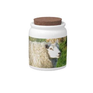 Irish Sheep Candy Jars