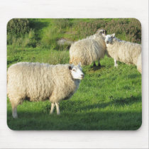 Irish Sheep Mouse Pad