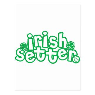 Irish Steer Postcard
