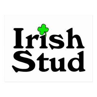 Irish Stud Postcard