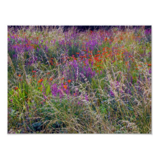 Irish Summer Meadow Poster